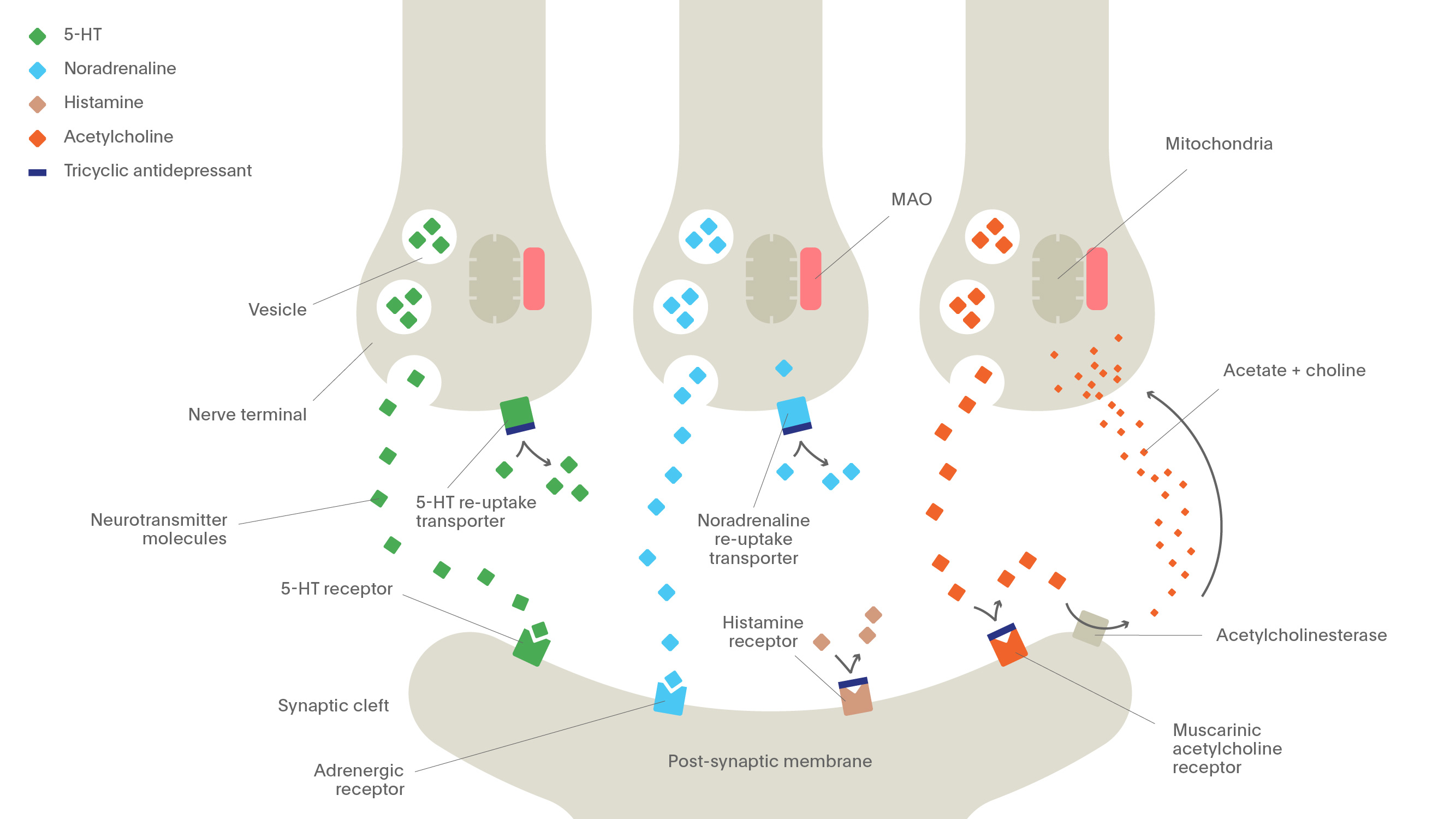 Mechanism of Action of different antidepressants